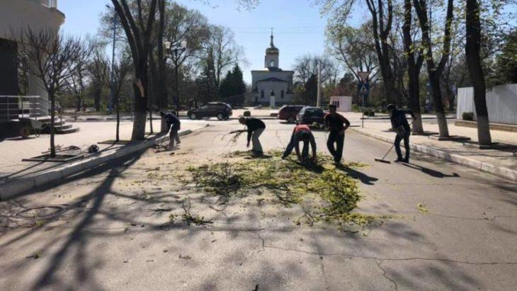 Mai mulți bărbați surprinși de un consilier municipal în timp ce tăiau un copac în centrul orașului