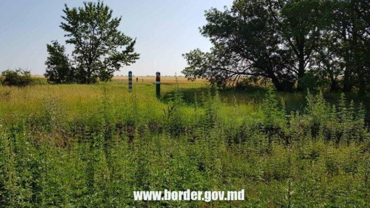 """O plantație de 10 ari a fost descoperită de polițiștii de frontieră în cadrul operațiunii """"MAC – 2020""""//FOTO"""