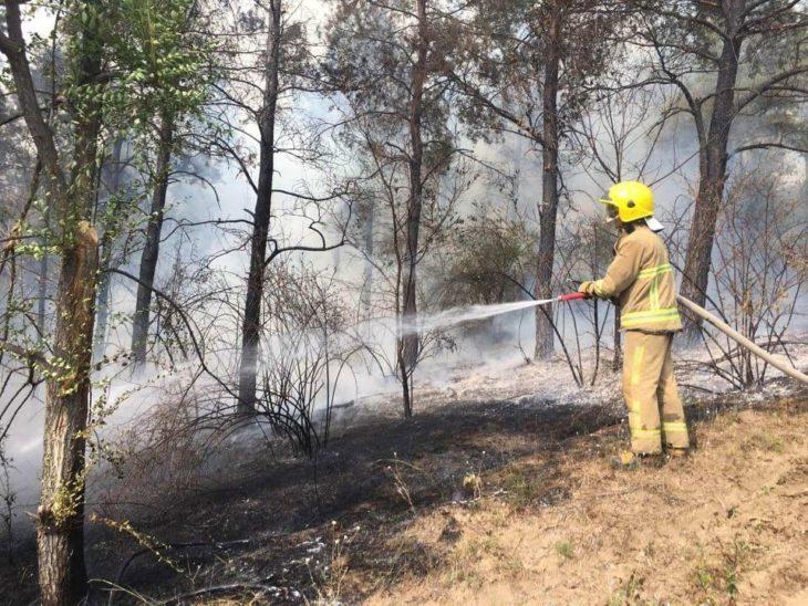Intervenția pompierilor la Cahul pentru stingerea unui incendiu într-o pădure de salcâmi /FOTO/VIDEO