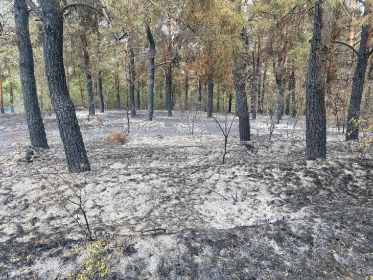 Incendiu în pădurea de salcâm și pini din Lopățica /VIDEO