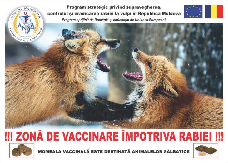 Azi începe profilaxia îmbolnăvirii cu rabie la animale. Atenție la câini!