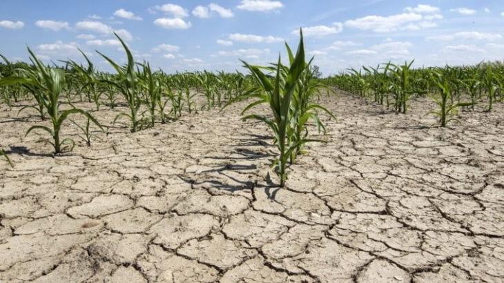 AIPA a autorizat spre plată primele cereri de acordare a compensației pentru diminuarea consecințelor calamităților naturale