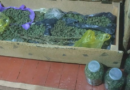 Droguri în valoare de peste un milion de lei au depistate la un bărbat din Giurgiulești