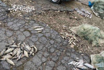 Braconaj piscicol în sudul țării: Circa 50 kg de pește a fost pescuit ilegal