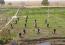 Direcția Regională Sud s-a alăturat campaniei ¨Un arbore pentru dăinuirea noastr㨠/VIDEO