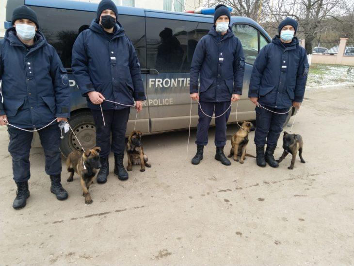 Echipa DR Sud a Poliției de Frontieră s-a suplinit cu încă 4 patrupezi