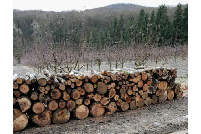 """Autorităţile vor examina circumstanțele tăierii de copaci în Rezervația """"Plaiul Fagului"""""""