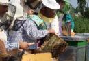De două ori mai multe granturi pentru inițierea afacerilor în apicultură. Aplică acum!