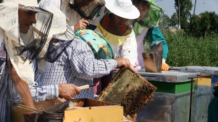 A fost lansată campania #OameniPentruAlbine pentru a preveni otrăvirea albinelor