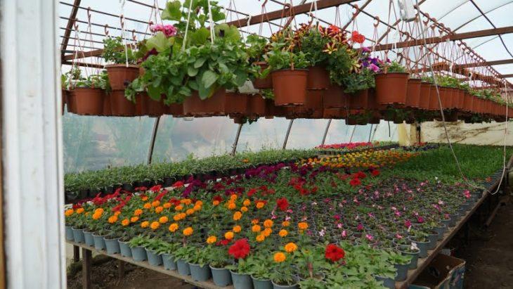 Business pe timp de criză: Afacerea cu flori a unei familii din s. Colibași // VIDEO