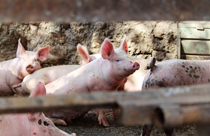 Producătorii de carne, dezamăgiți: Piața invadată de importuri, prețul mizer