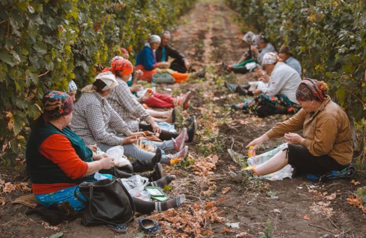 Zilierii care muncesc în agricultură vor putea fi remunerați prin vouchere. Proiectul a fost votat în prima lectură