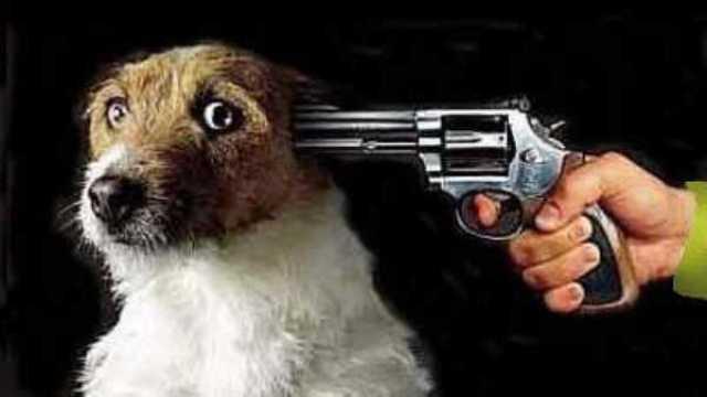 """La Cahul se va începe """"lichidarea"""" câinilor maidanezi?"""