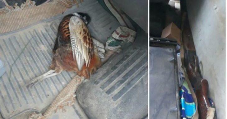 Armă și cartușe de vânătoare, găsite în mașina unui locuitor din raionului Cahul