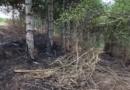 Incendiu și defrișări au avut loc în păduricea din Cahul