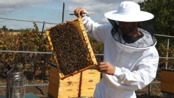Tânăr apicultor: Să devii apicultor trebuie să ai o atracție sufletească