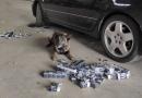 """Patrupedul NERO a """"mirosit""""  mii de țigarete, ascunse într-un autoturism /VIDEO"""