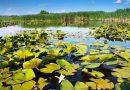 Trei locuitori ai satului Slobozia Mare documentați pentru pescuit ilicit pe lacul Beleu