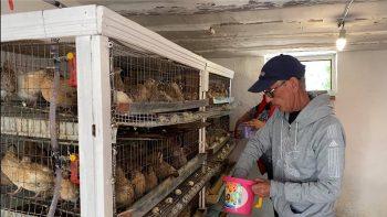 Cu ajutorul Uniunii Europene, vor să-și dezvolte ferma de prepelițe până la 2 mii de capete