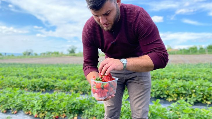 Victor Voina despre cultivarea căpșunelor: O fac mai mult din pasiune pentru fruct //VIDEO