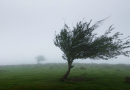 Meteorologii au emis COD GALBEN de vânt puternic