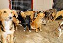 Un nou azil pentru câini maidanezi va fi deschis la Cahul